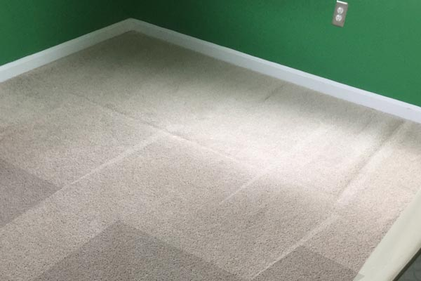 Steam Carpet Cleaning Avondale, Jacksonville